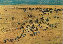 Ngorongoro - African Wild Life - Tanzania