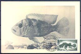 1958 , SAHARA ESPAÑOL , ED. 110 - DIA DEL SELLO , PECES , MAT. VILLA CISNEROS / SAHARA ESPAÑOL - Sahara Español