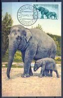1958 , GUINEA ESPAÑOLA , ED. 371 - DIA DEL SELLO , FAUNA , ELEFANTES , MAT. SANTA ISABEL / FERNANDO POO - Guinea Española
