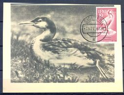 1961 , IFNI , ED. 84 - DIA DEL SELLO , FAUNA AFRICANA , AVES,  MAT. DE SIDI IFNI - Ifni