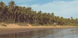 Guyane Fançaise - Ile De Cayenne - Plage De Zéphir - Carte Panoramique (104 X 208mm) Circ Sans Date - Cayenne