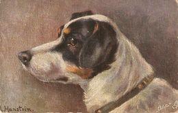 """A. Hanstein. Fox Terrier Dog"" Tuck Oilette Favourite Dogs Series PC # 4092 - Tuck, Raphael"