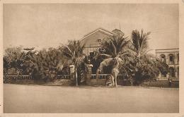 DJIBOUTI - N° 5 - LA POSTE - Djibouti