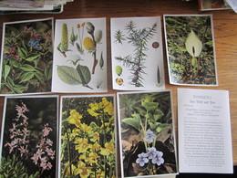 PLUS DE 100   PLANTS - A. Green Plants