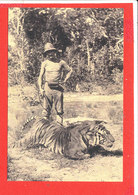 Chasse Tigre Carte Animée - Chasse