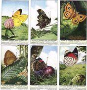1759 Lettres Et Chiffres Chez Les Papillons - LETTERS EN CIJFERS BIJ DE VLINDERS - Liebig, Read Description For Discount - Liebig
