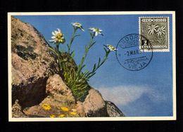 ANDORRE ANDORRA Espagnol Superbe Carte Maximum Fleur 2 Centimos EDELWEIS  -2 MARS 1957     2 Scan - Spanisch Andorra