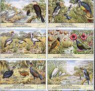 1632 Oiseaux Du Congo - VOGELS VAN BELGISCH KONGO - Liebig Serie  –  Read Description & Get Discount Up To 50% - Liebig