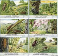 1689 Les Parasites Des Cultures   - LANDBOUWPARASIETEN  Liebig Serie  –  Read Description & Get Discount Up To 50% - Liebig