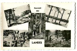 CPSM 40 Landes Souvenir Des Landes - France
