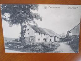 Francorchamps , Maison Ardennaise Et Vieux Chene , Nels - Belgique