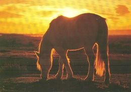 HORSES / PFERDE / CHEVAUX /    POSTCARD  UNUSED     ( H  4885 ) - Pferde