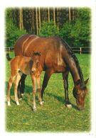 HORSES / PFERDE / CHEVAUX /    POSTCARD  UNUSED     ( H  4889 ) - Pferde