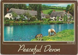 V1786 Bickleigh - Peaceful Devon - Cavalli Horses Chevaux Caballos Pferde / Viaggiata - Inghilterra