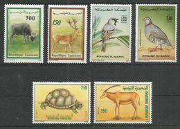 TUNISIA - MAROC - Animals - Birds - Wild Animals - Nature - Uccelli
