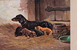 CPA Animaux Chien Dog Teckel Dackel Daschsund Chienne Avec Ses Petits Chiots Illustrateur (2 Scans) - Chiens