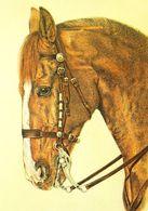 HORSES / PFERDE / CHEVAUX /    POSTCARD  UNUSED     ( H  4908 ) - Pferde