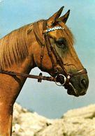 HORSES / PFERDE / CHEVAUX /    POSTCARD  UNUSED     ( H  4911 ) - Pferde