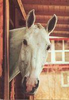 HORSES / PFERDE / CHEVAUX /    POSTCARD  UNUSED     ( H  4922 ) - Pferde