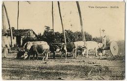 Vista Campestre  Bahia - Salvador De Bahia
