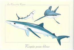 *   Les Raies Et Les Requins - Requin Peau-bleue - Vissen & Schaaldieren