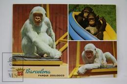 Animal Postcard - Zoo Park Barcelona - Copito De Nieve - Snowflake Gorilla - Monos