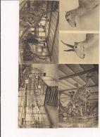 Musée Royal D''histoire Naturelle Lot De 14 Cartes Postales - Musea