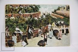 Old Children Postcard - Small Children Piking Grapes - Grupo De Niños Y Familias