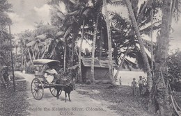 CEYLON - COLOMBO - BESIDE THE  KELANIYA RIVER - Sri Lanka (Ceylon)