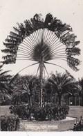 MALAYA - TRAVELLING TREE - Malaysia