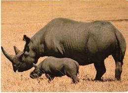 Rhinocéros Noirs - Rhinocéros