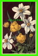 FLEURS -  TROLLE D'EUROPE - TROLLIUS EUROPAEUS - NARCISSE, NARCISSUS POETICUS - TRAVEL IN 1952 - - Fleurs