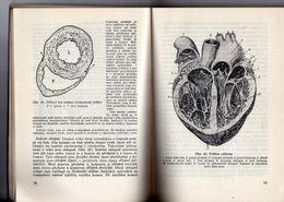 Nauka O Cloveku - 1952 - Science Of Human Die Lehre Vom Menschen - Books, Magazines, Comics
