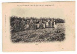 Westmalle. - Cistercienzer Abdij (Trappisten)  Oogst - Malle