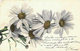 Bouquet De Saint-Jean - Oblitération De 1905 - Flores, Plantas & Arboles