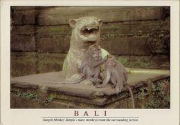 CPM Bali, Sangeh Monkey Temple - Indonesien