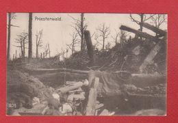 Priesterwald  -  PLIURE CENTRALE - France