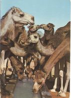 Tematica- Animali - Cammelli - Bons Baisers De Tunisie - Wrote But Not Sent - Autres