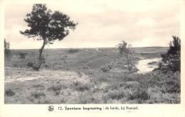 Spontane Begroeiing : De Heide, Bij Koersel - Beringen