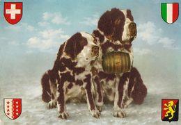 St. Bernard - Bernhardiner - Dog - Chien - Cane - Hund - Hond - Perro - Stieren