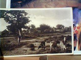 SOMALIA VILLAGGIO INDIGENO MUCCHE  ANIMATA AOI AFRICA ITALIANA V1936  GO21848 - Somalia