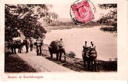 Scene At KUALA KANGSA - Indonésie - éléphants - Indonesia