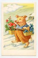Cochon Humanisé . Porc . Humanized Pig - Cochons