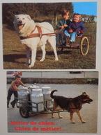 Lot De 2 Cpm  ATTELAGE DE CHIENS - Postcards