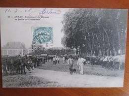 Arras , Campement De Chevaux Au Jardin Du Gouverneur - Arras