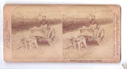 ANTWERP ANVERS Belgique Hondenkar Dog Cart Milk Woman Attelage De Chien Laitiere  Carte Stereoscopique - Stereo-Photographie
