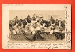 GBH-20  Festival De Chats. Précurseur, Circulé 1903 De Berlin Vers Roubaix - Cats