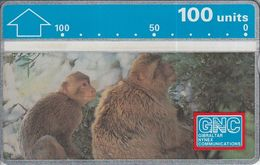 Monkeys - Gibraltar