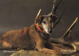 Westfalenterrier - Westfalen Terrier - Dog - Chien - Cane - Hund - Hond - Perro - WILD HUND - Hunde