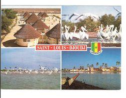 ILE DE SAINT LOUIS ET PARC DE DJOUDJ - MULTI VUES - Senegal